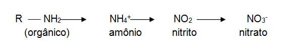 reacao-nitrogenio-1