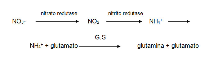 reacao-nitrogenio-2